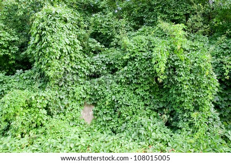 Green tangle. - stock photo