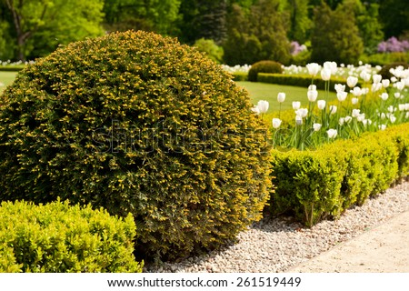 Green Taxus baccata Yew shrub ornamental garden plant, globular shape bunch, coniferous plant grow in Poland, Europe, horizontal orientation, nobody.