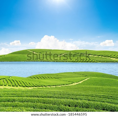 Green tea garden on island and river, beautiful landscape and blue sky - stock photo