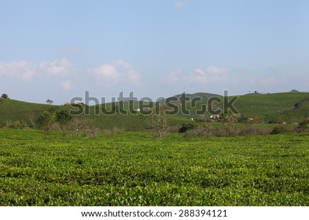Green tea hills stretch out endlessly in Moc Chau plateau SONLA, VIETNAM