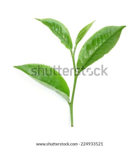 Green tea leaf isolated on white - stock photo