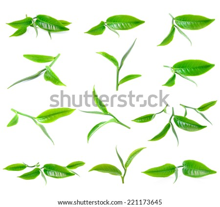Green tea leaf isolated on white background - stock photo