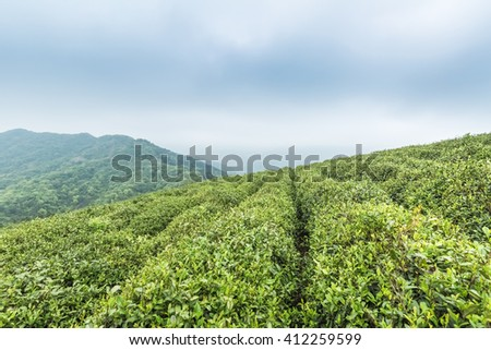 green tea plantation against cloudy sky in lushan mountain , China