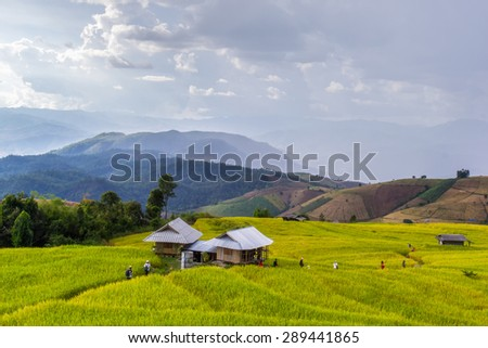Green Terraced Rice Field in Pa Pong Pieng , Mae Chaem, Chiang Mai, Thailand - stock photo