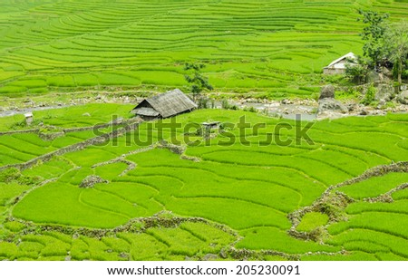Green Terraced Rice Field in Sapa, Lao Cai, Northwest Viet Nam in foggy day