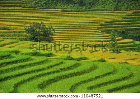 Green Terraced Rice Field in Sapa, Vietnam - stock photo