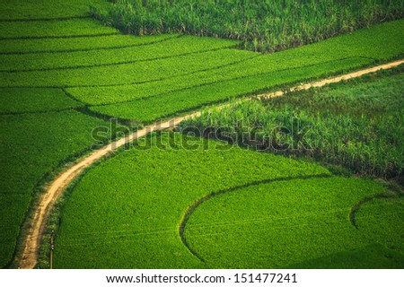 Green Terraced Rice with sugar cane Field in Guangxi, China
