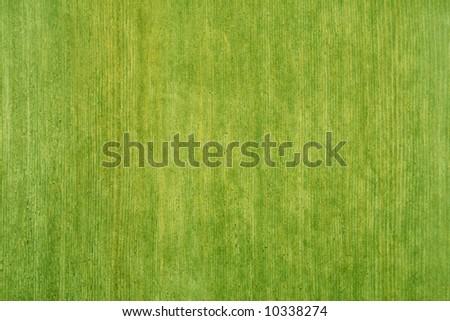 Green texture - stock photo