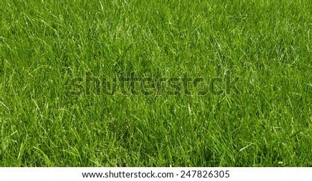 Green texture of grass is in a garden - stock photo