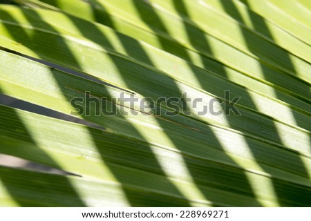 Green texture of palm leaves illuminated by the sun  - stock photo