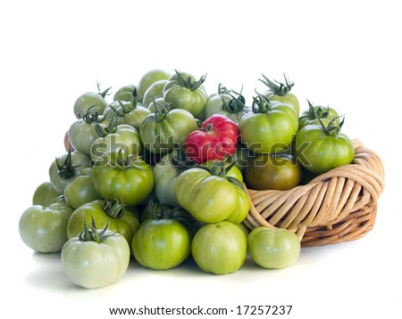 Green tomatoes with one red in a basket isolated on white background.