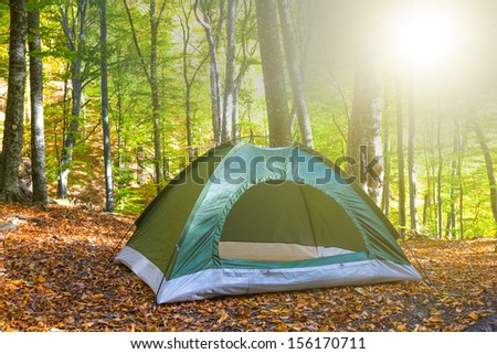 green touristic tent in a forest at the morning