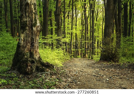 Green trail into the forest - stock photo