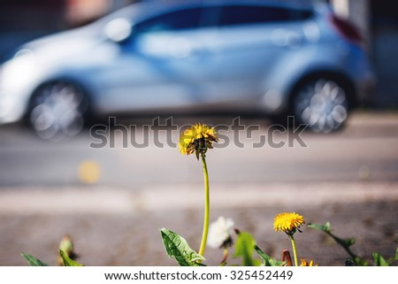 Green transportation - dandelion closeup with hybrid car in the background - ecology environmental conservation and modern transportation concept - stock photo