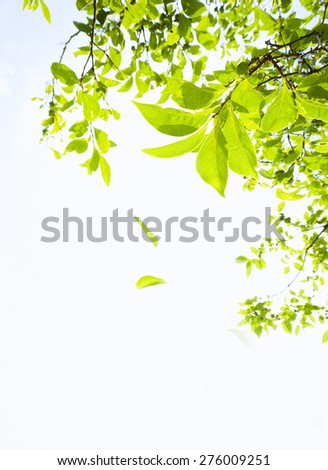 Green tree - stock photo