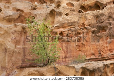 Green Tree against red rock formation - stock photo