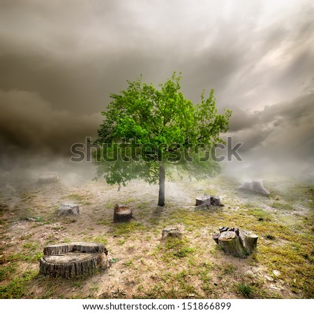 Green tree among the stumps in cloudy day - stock photo