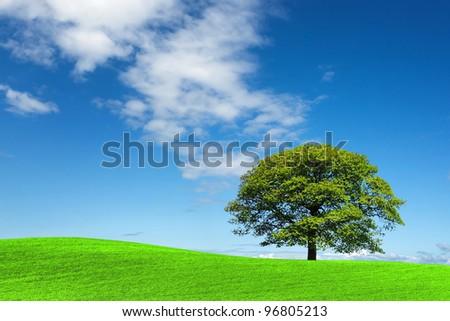Green tree and blue sky - stock photo