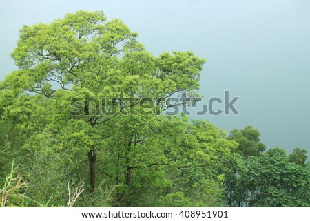 Green tree and blurry and misty background