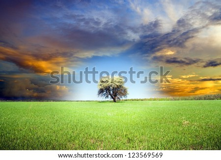 Green tree and dark sky. Nature composition.