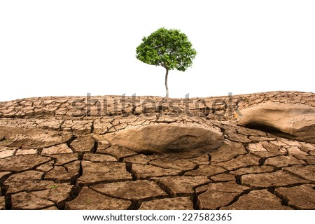 Green tree and dried soil texture - stock photo