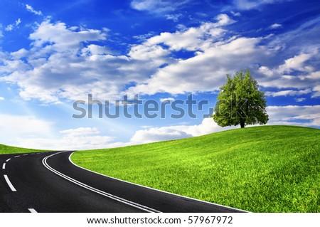Green tree and empty road - stock photo