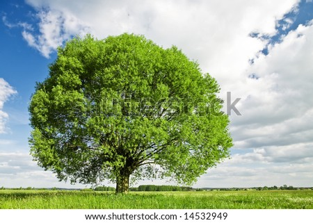 Green tree and grassland against blue sky with white clouds. - stock photo