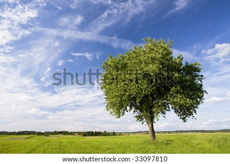 Green tree and grassland against blue sky with white clouds.