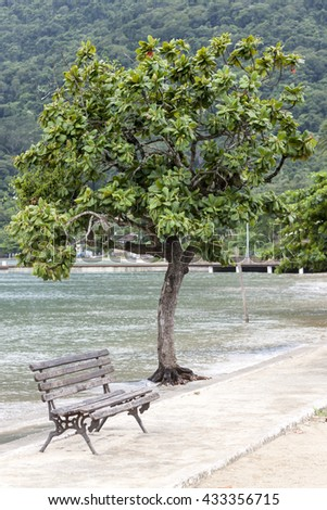 Green tree and single bench on the beach - stock photo