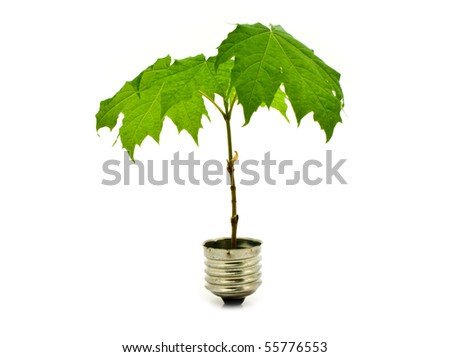green tree as ecological energy is isolated white for your illustrations - stock photo