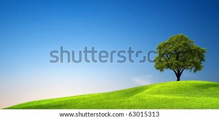 Green tree at sunset - stock photo