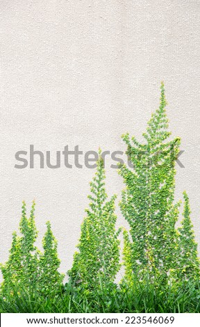 green tree covered on Cement wall - stock photo