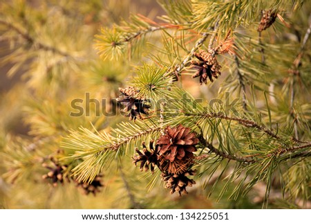 green tree forest detail close-up in spring time - stock photo