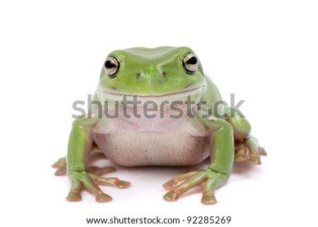 Green tree frog on white background - stock photo