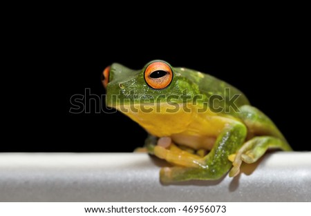 green tree frog sits on brushed metal rail with black background