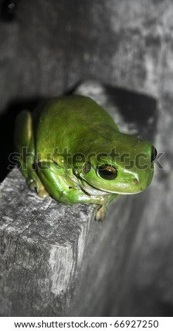 Green Tree Frog Sitting On A Rural Fencepost At Twilight