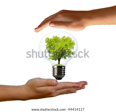 green tree growing in a bulb - stock photo