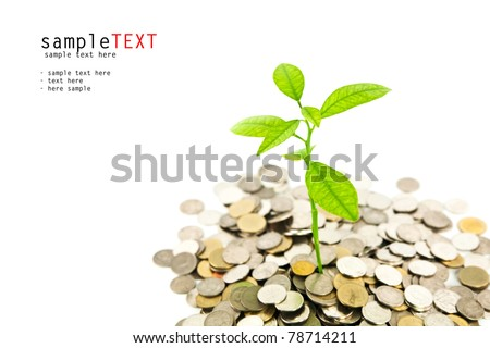 Green tree growing on money coins, isolate on white background - stock photo