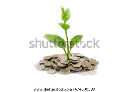 Green tree growing on money coins, isolate on white background. Concept of saving or invest