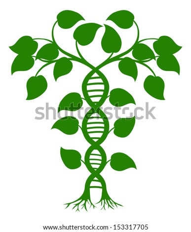 Green tree illustration with the trees or vines forming a DNA double helix - stock photo