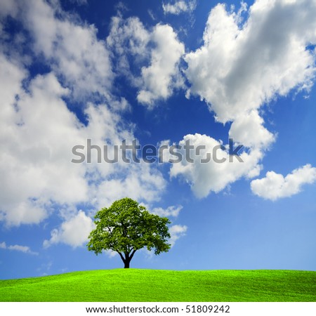Green tree in a field - stock photo