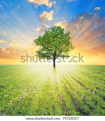 green tree in a field in a rays of rising sun - stock photo