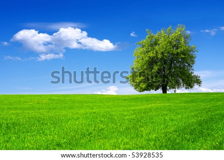 Green tree in a field on blue sky - stock photo
