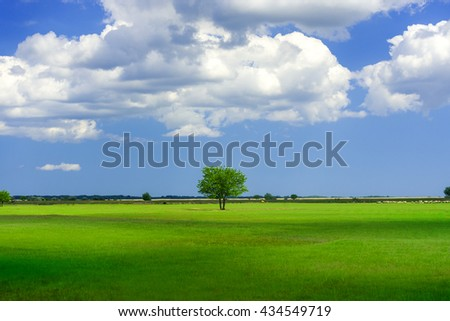 Green tree in a field with blue sky - stock photo