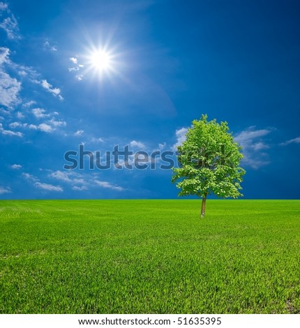 green tree in a spring field - stock photo