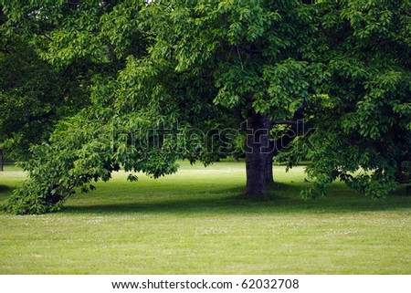 Green tree in park - stock photo
