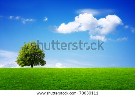 Green tree in summer - stock photo