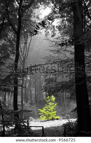 green tree in the midst of grey - stock photo