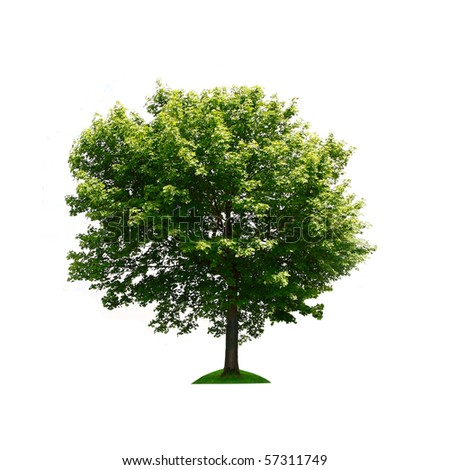 Green tree isolated - stock photo