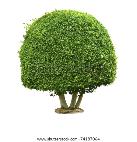 Green tree isolated on the white - stock photo